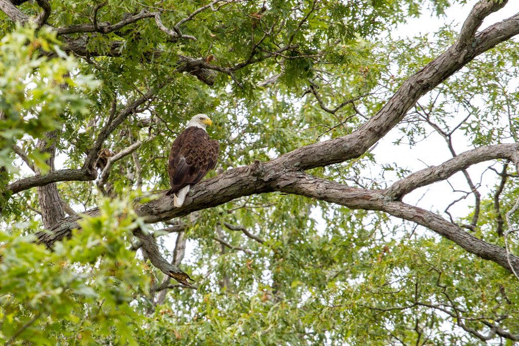 Shoal Creek Conservation area is one of the top 10 things to do in Litchfield.