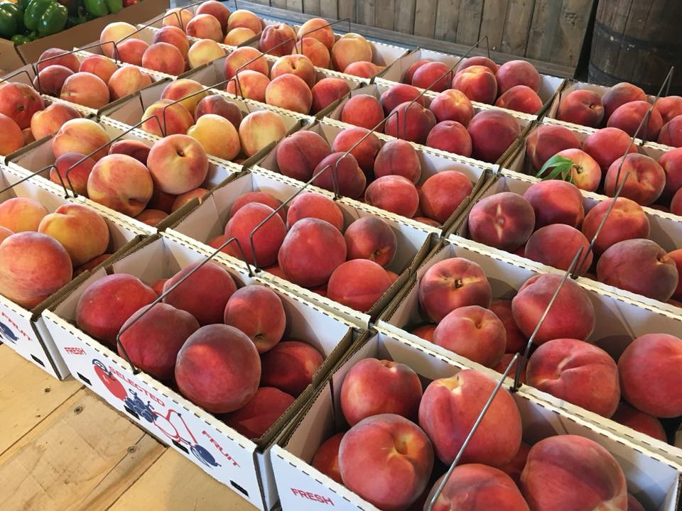 Boxes of pick your own peaches at Kern Family Orchard