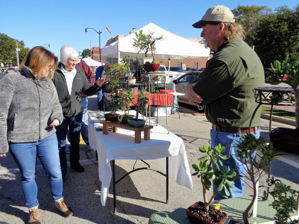 Bonsai Tree Vendor Set-up Sample for the Litchfield Farmers Market